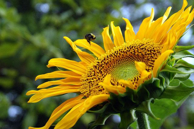 10. Pyłki atakująJeżeli jesteś jednym z 15 milionów Polaków cierpiących na alergię, wiesz, jak może być kłopotliwa. Wiosna toszczególnie ciężki czas dla osób uczulonych na pyłki, które próbują pozbyć się objawów alergii za pomocą różnychleków. Leki jednak leczą objawy, a nie źródło problemu i następnej wiosny uczulenie znowu powróci.