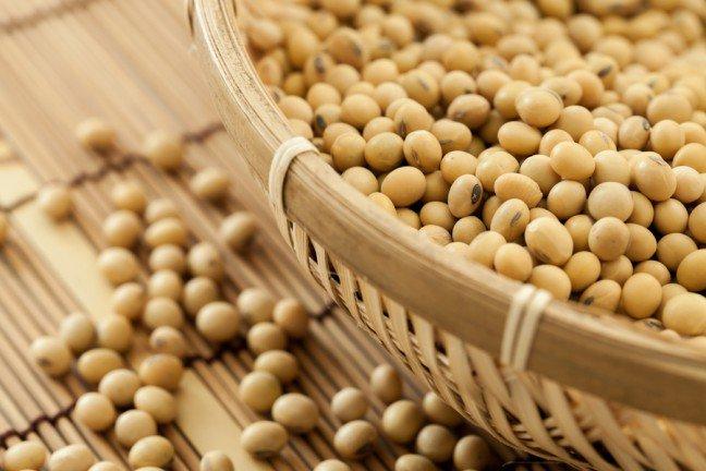 10. Soja to główny składnik we współczesnej hodowli zwierząt
